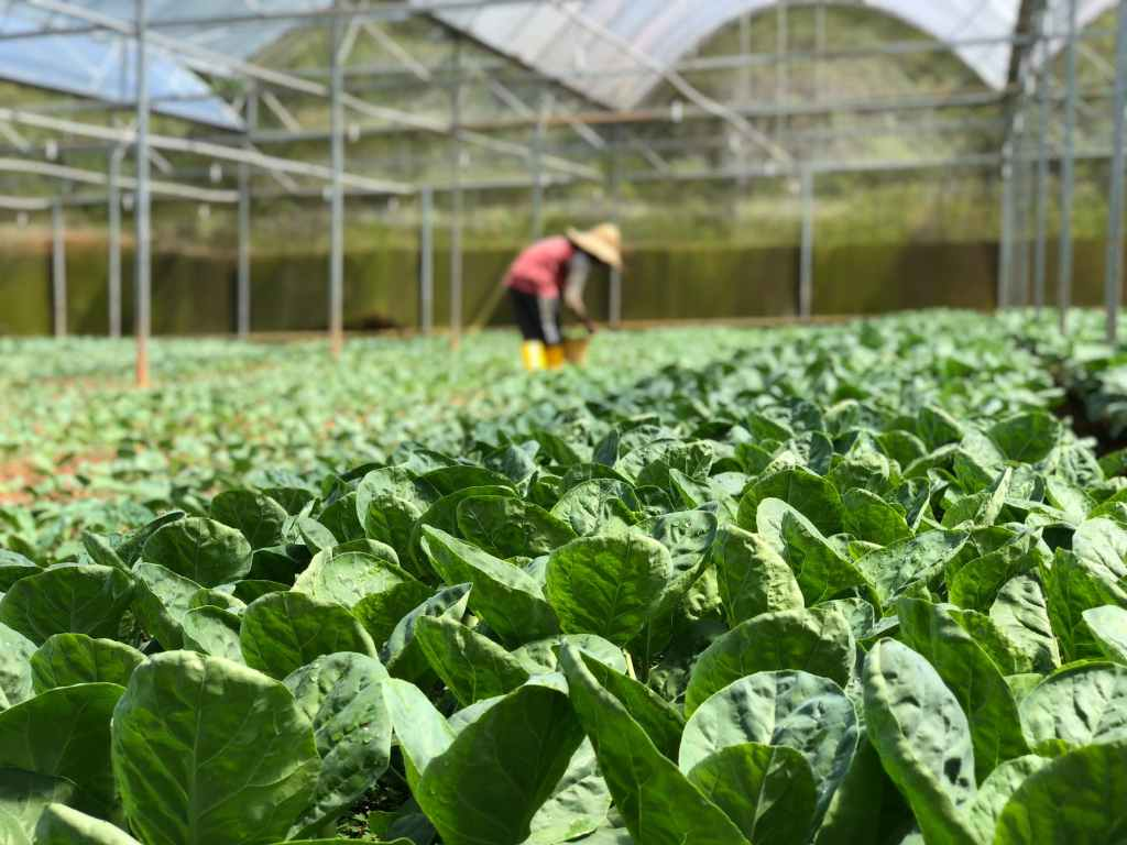 The following are characteristics of intensive commercial farming
