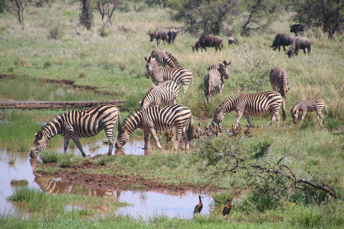Importance of tourism in Tanzania