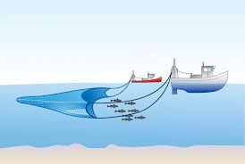 Image result for trawling fishing method