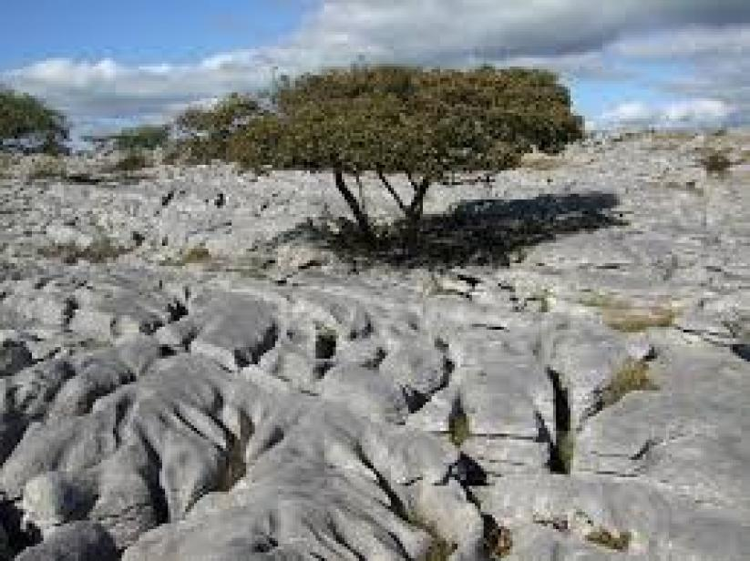 Image result for carbonation weathering