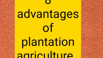 Advantages of plantation agriculture