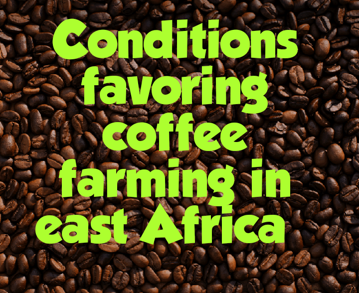 Conditions for coffee farming in East Africa