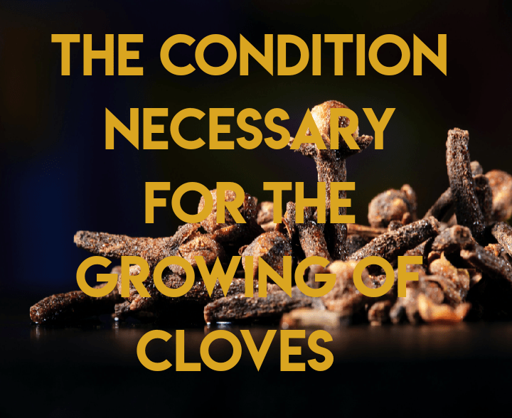 Conditions for growth of cloves