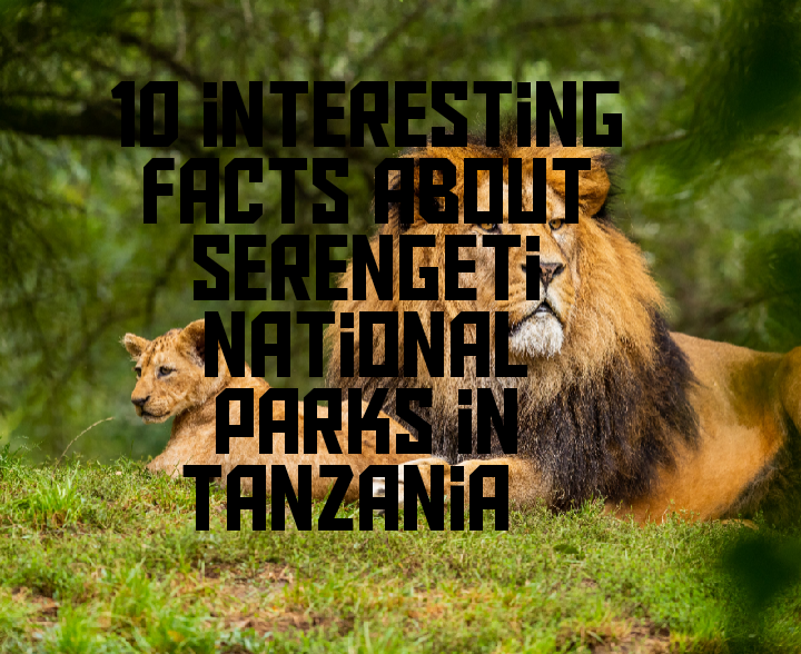 Interesting facts about Serengeti national park in Tanzania