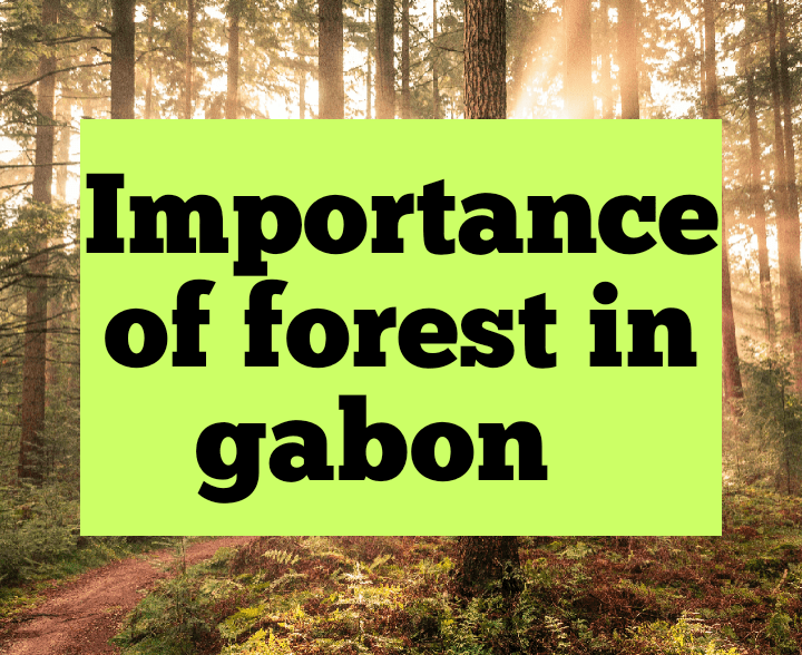 Importance of forests in Gabon