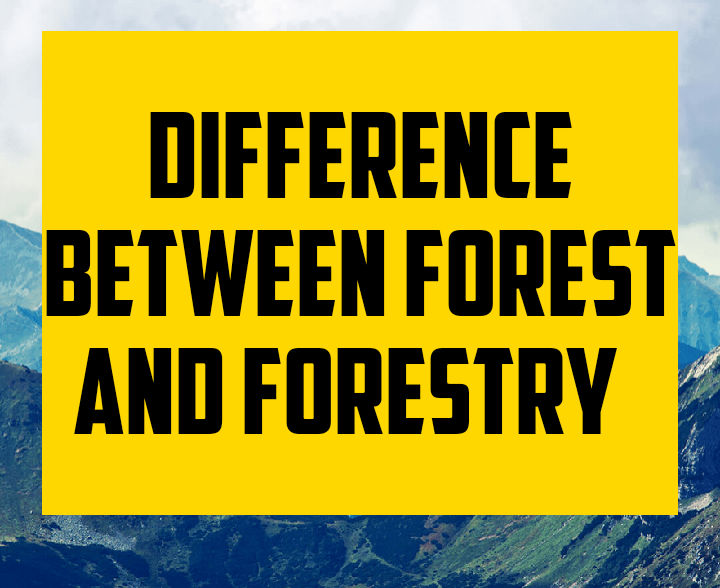 Difference between forest and forestry