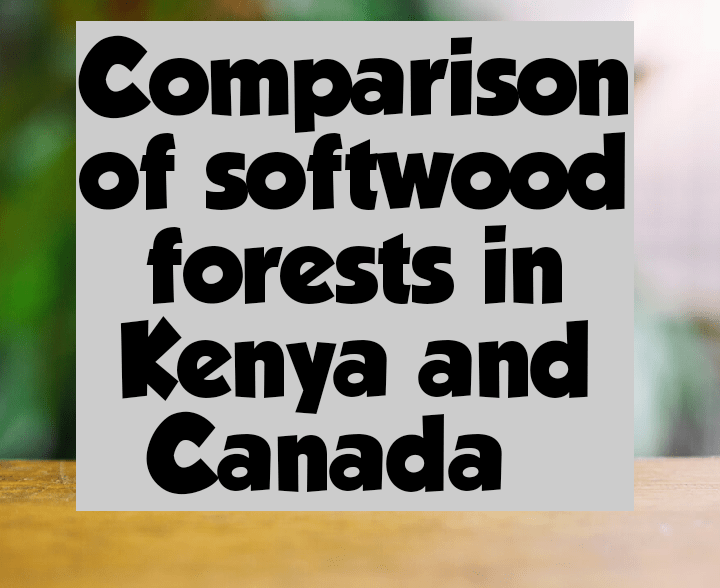 Comparison of softwood forests in Kenya and canada