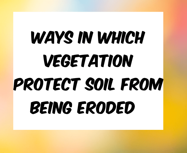 Ways in which vegetation protect soil from soil erosion