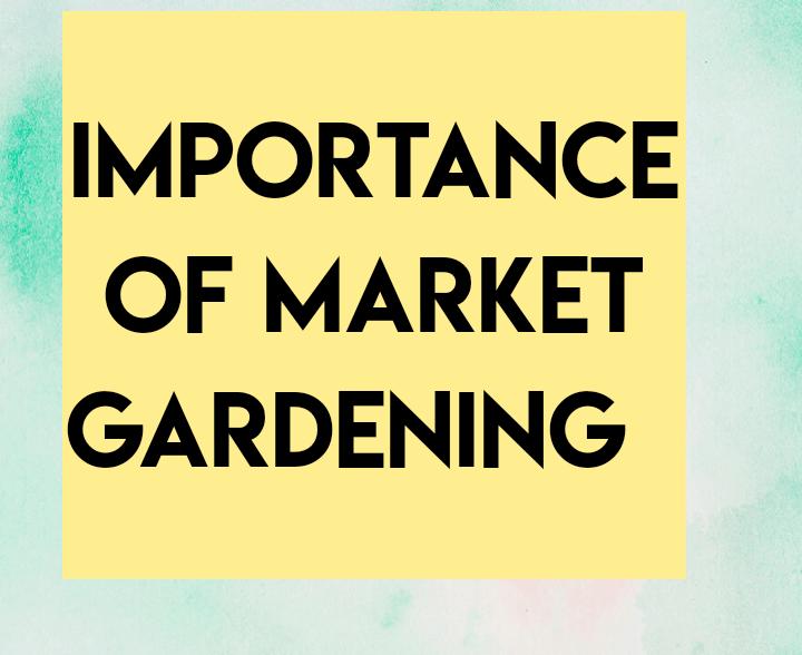 Importance of market gardening