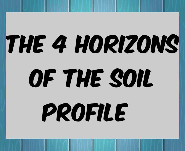 Four horizons of the soil profile