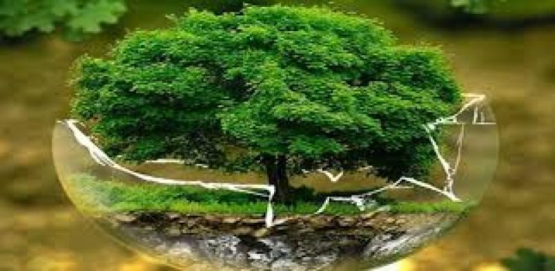 Environmental conservation refers to the protection of the environment from being destructed through practicing various ways of environment protection such as destocking, afforestation, recycling wastes and planting of cover plants
