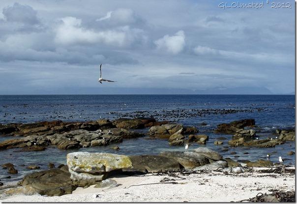 07a Seagulls Buffels Bay Table Mt NP Cape Pennisula ZA (1024x703)