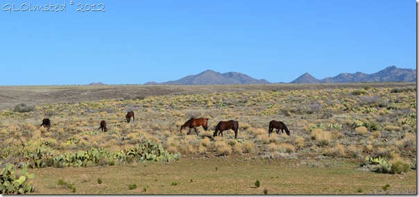 08a Horses along Deer Creek Rd AZ (1024x480)