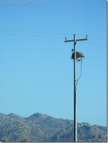 11a Bird in nest on electrical pole Deer Creek AZ (768x1024)