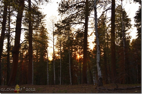 01e Sunset through the forest NR GRCA NP AZ (1024x678)