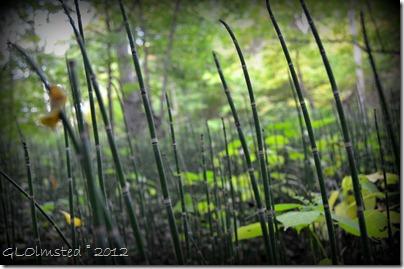 12 Bamboo along Kaskaskia trail Starve Rock State Park IL (1024x678)