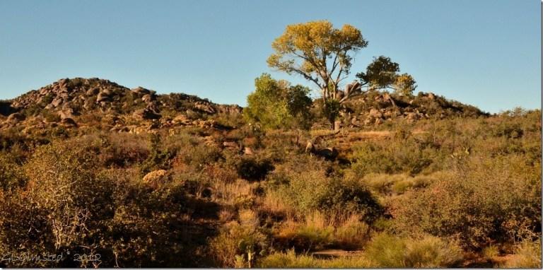 03 121 Poplar Weaver Mts Yarnell AZ (1024x507)
