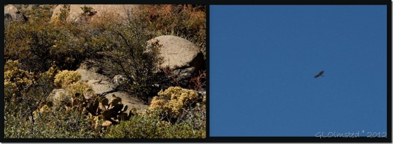 05 Birds Weaver Mts Yarnell AZ (1024x372)