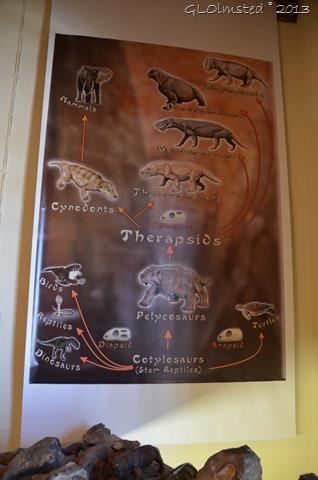 Fossils Ganora Karoo