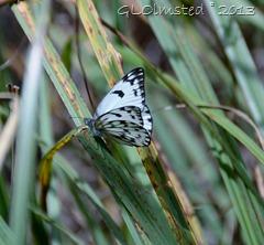 Butterfly Hogsback Arboretum SA