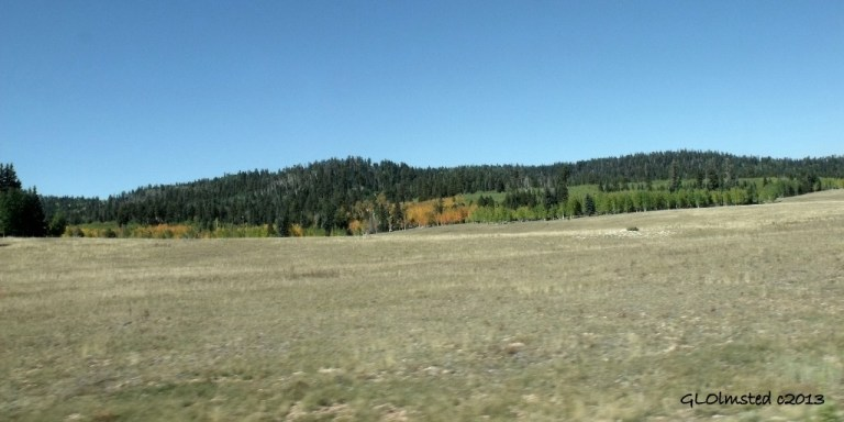 Fall colors N Kaibab NF AZ