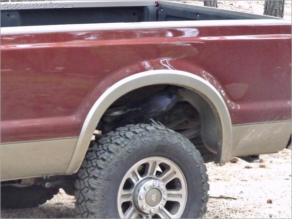 Raven on truck tire