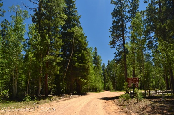 Forest Road 271 to Timp Point Kaibab National Forest Arizona