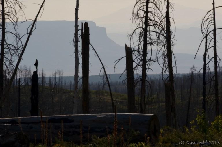 Vermilion Cliffs & Navajo Mt seen thru 2006 Warm Fire Kaibab National Forest Arizona