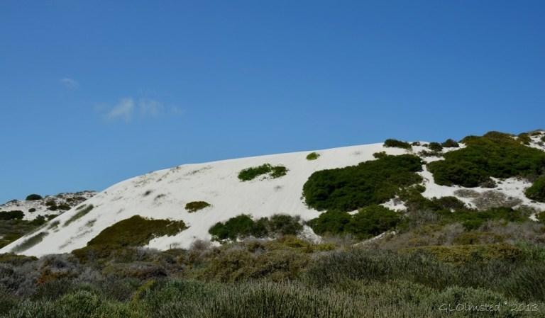 Sand dunes along the Atlantic Ocean West Coast National Park Langebaan South Africa