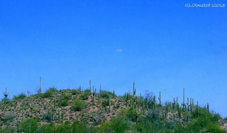 Saguaros along SR74 East AZ