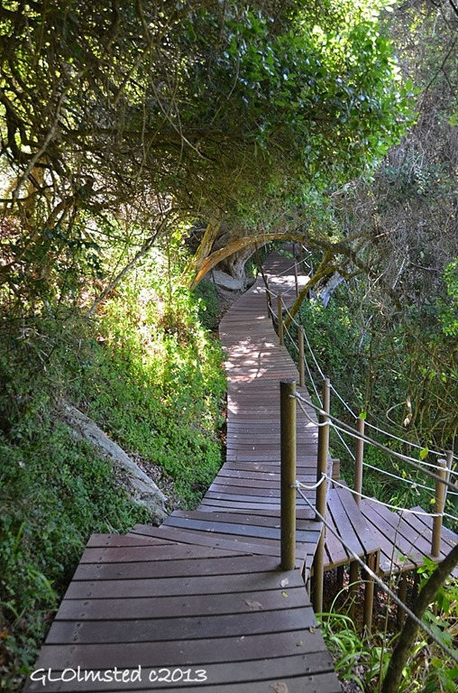 Boardwalk section of Suspension Bridge trail at Storms River Mouth Tsitsikamma National Park South Africa