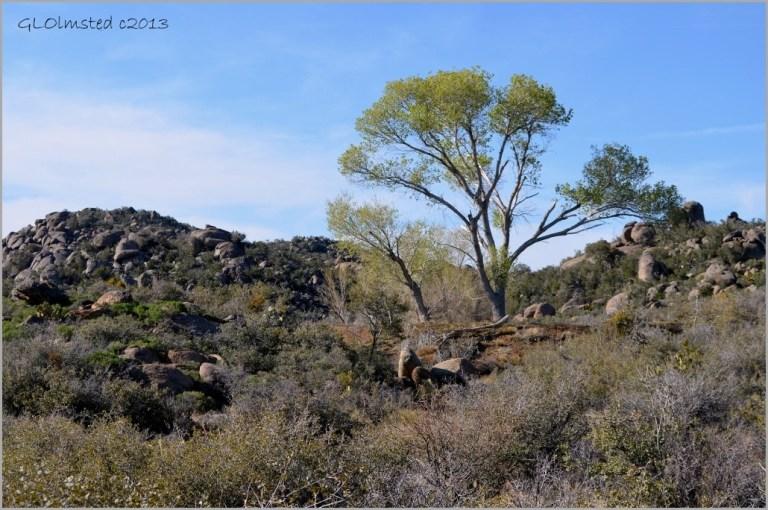 Poplar by pond Weaver Mountains Yarnell Arizona