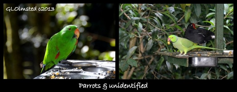 Parrots and unidentified Birds of Eden Plattenberg South Africa