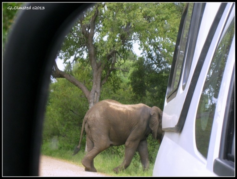 Elephant walking behind truck Kruger National Park South Africa