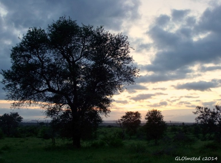 Sunrise Kruger National Park South Africa