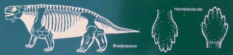 Bradysaurus diagram Karoo National Park South Africa