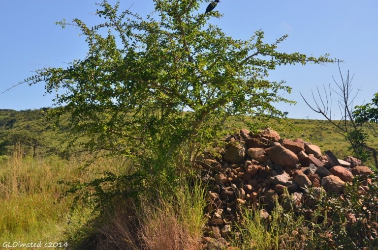 Burial cairn Hluhluwe iMfolozi National Park South Africa