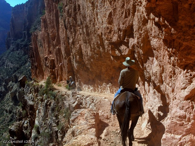 Mule riding North Kaibab trail Roaring Springs Canyon North Rim Grand Canyon National Park Arizona