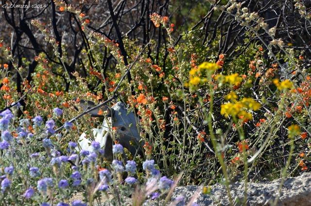 Burro statue in wildflowers Yarnell Arizona