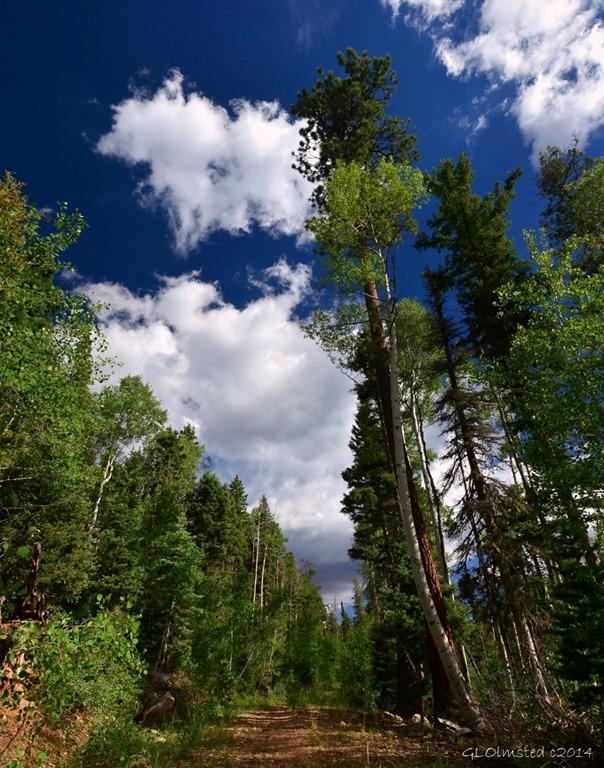 01 DSC_3536a AZ Trail NR GRCA NP AZ g pano (806x1024)