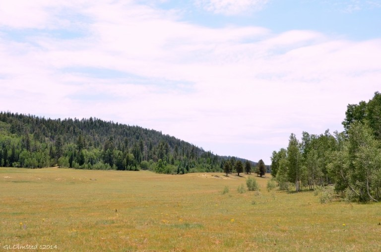 Meadow FR22 Kaibab National Forest Arizona