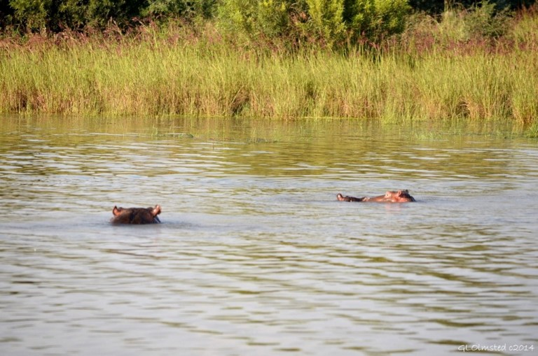 07 DSC_0067 Hippos Pilanesburg GR SA fff68 (1024x678)