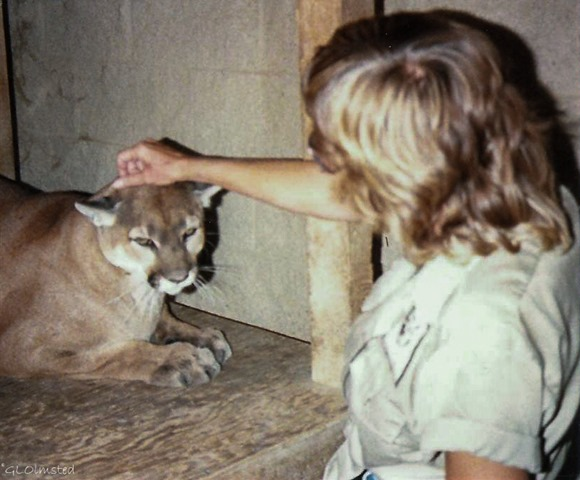 Gaelyn & Sierra the Cougar  California Living Museum Bakersfield California June 1989