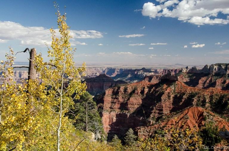 Fall aspen and Brady Peak from Ken Patrick trail North Rim Grand Canyon National Park Arizona