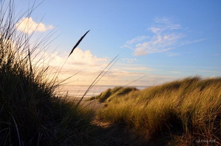 Beach grass Bandon Oregon
