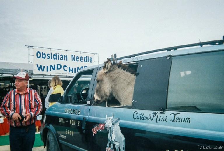 Donkey in minivan Quartzsite Arizona