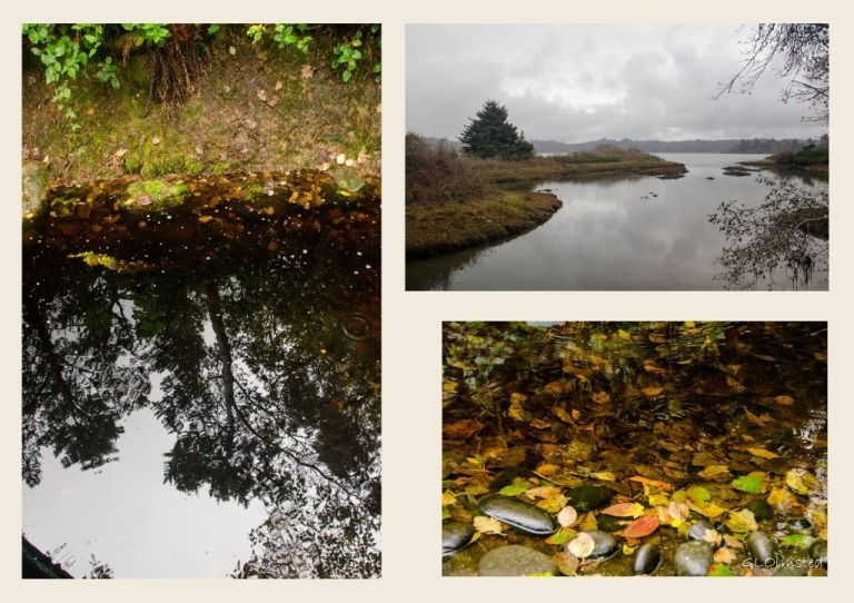 Forest reflection, fall leaves and estuary Oregon Coast Aquarium Newport Oregon collage