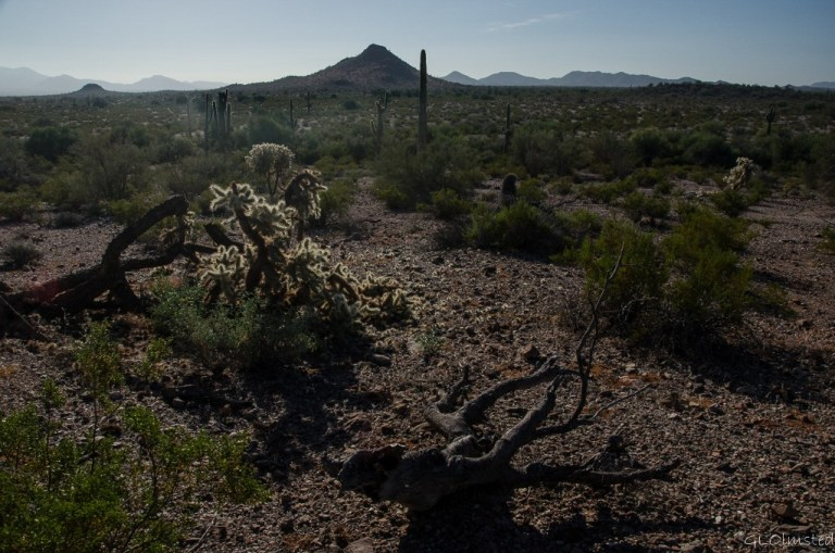 Morning light on desert Freeman Road BLM Arizona