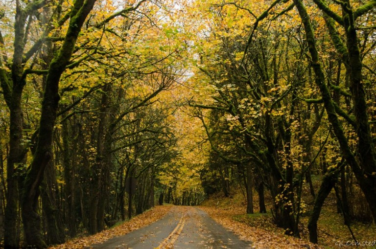 Fall colors over Columbia River Gorge Historic Scenic Highway Oregon