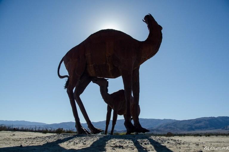 Camel metal sculpture by Ricardo Breceda Galleta Meadows Borrego Springs California
